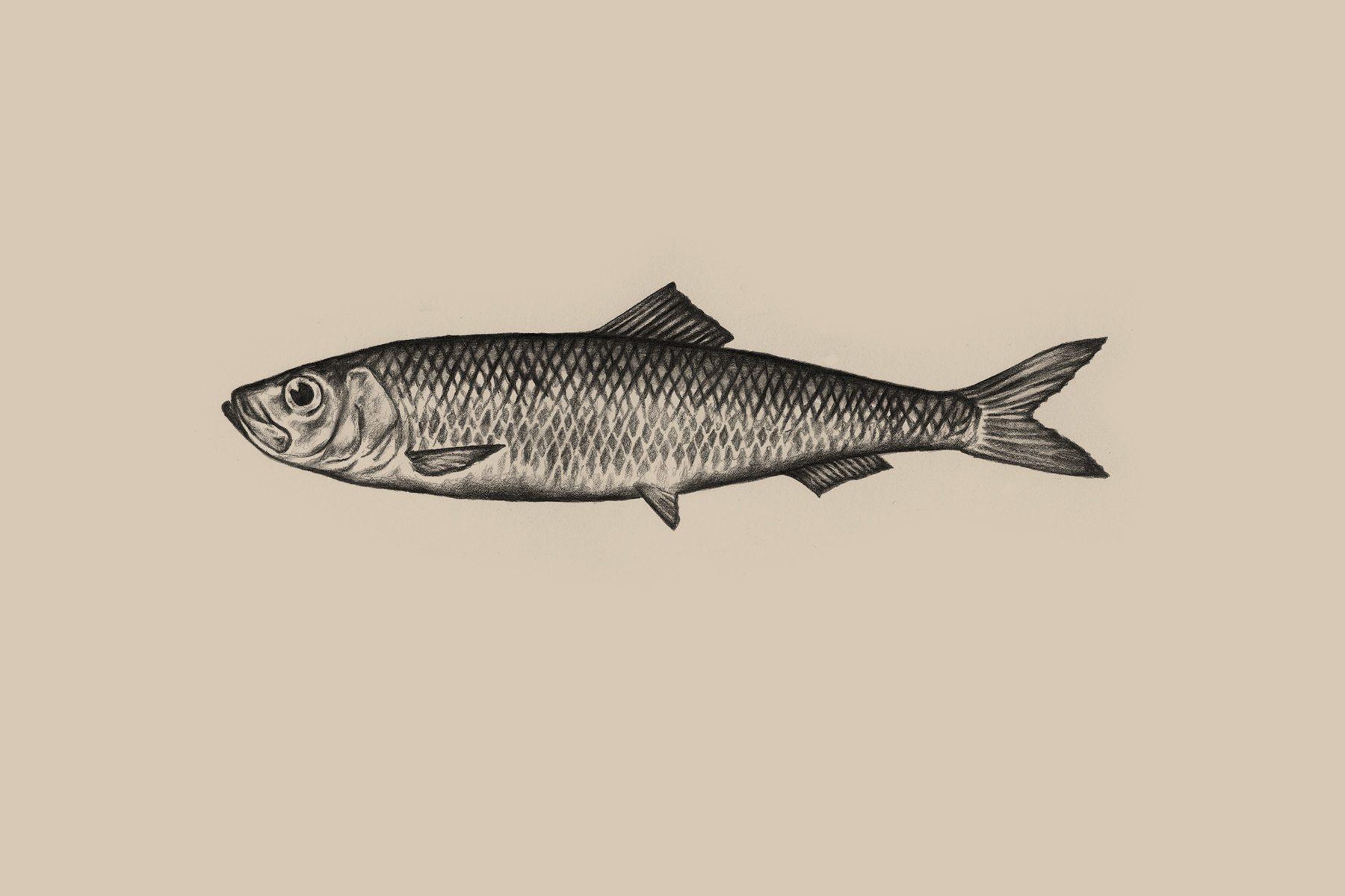Massor av fisk söka gratis dating